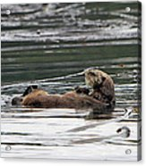 Sea Otter Profile Acrylic Print