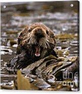 Sea Otters Acrylic Print