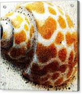 Sea Shell Beach Painting Art Acrylic Print