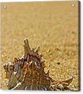 Sea Shell By The Sea Shore Acrylic Print