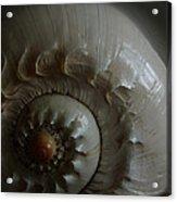 Sea Shell Joy Acrylic Print
