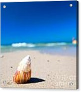 Sea Shell On The Beach Acrylic Print