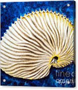 Sea Shell Original Oil On Canvas No.2. Acrylic Print by Drinka Mercep