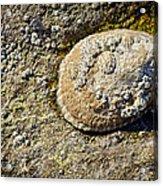 Sea Shell Rock Acrylic Print