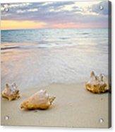 Sea Shells At Sunset Acrylic Print