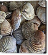 Sea Shells Acrylic Print by Jeff Swanson
