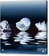 Sea Shells On Water Acrylic Print