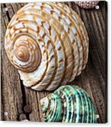 Sea Shells With Urchin  Acrylic Print by Garry Gay