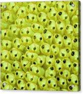 Sea Squirt (clavelina Lepadiformis Acrylic Print