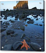 Sea Stacks And Star Fish Acrylic Print