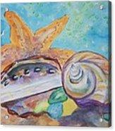 Sea Star-abalone-snail Shell Acrylic Print