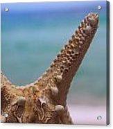 Sea Star And Ocean Acrylic Print