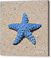 Sea Star - Light Blue Acrylic Print