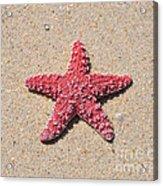 Sea Star - Red Acrylic Print