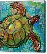 Sea Turtle Endangered Beauty Acrylic Print by M C Sturman