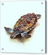 Sea Turtle II Acrylic Print