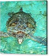 Single Sea Turtle Swimming Through The Water Acrylic Print
