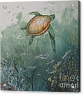 Sea Turtle Acrylic Print by Nancy Gorr
