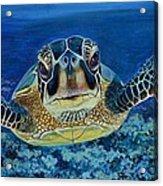 Sea Turtle Acrylic Print by Shirl Theis