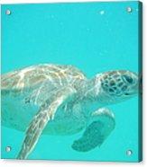 Sea Turtle Time Acrylic Print