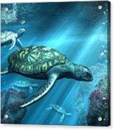Sea Turtles Acrylic Print