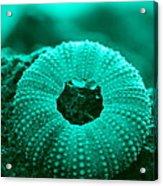 Sea Urshin Blue Acrylic Print