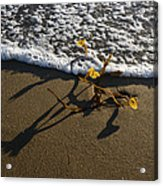 Sea Weed And A Wave Acrylic Print