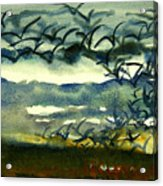 Seabirds Rising From The Marsh 2-27-15  Acrylic Print