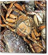 Seafood Acrylic Print