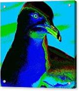 Seagull Art 2 Acrylic Print