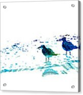 Seagull Art - On The Shore - By Sharon Cummings Acrylic Print
