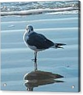 Seagull At Attention Acrylic Print