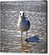 Seagull At Low Tide Acrylic Print