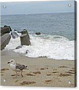 Seagull At The Sea Acrylic Print