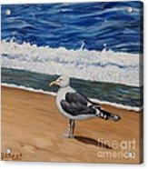 Seagull At The Seashore Acrylic Print