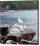Seagull Awaits Acrylic Print
