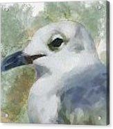 Seagull Closeup Acrylic Print