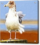 Seagull Colors Acrylic Print