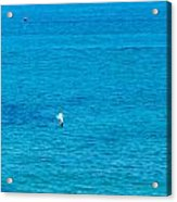 Seagull Cruising Over Azure Blue Sea Acrylic Print