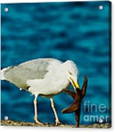 Seagull Dancing With A Star Acrylic Print