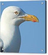 Seagull  Acrylic Print by Diane Rada