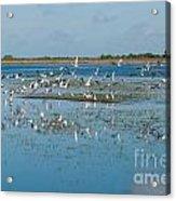 Seagull Flock Acrylic Print