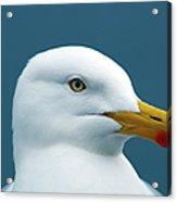 Seagull I Acrylic Print