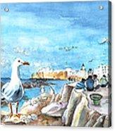 Seagull In Essaouira In Morocco Acrylic Print