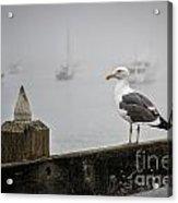 Seagull In Fog 1 Acrylic Print