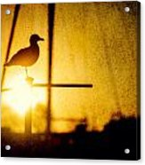 Seagull In Harbor Sunset Acrylic Print