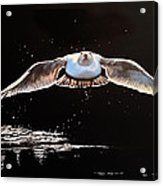Seagull In The Moonlight Acrylic Print