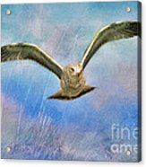 Seagull In The Storm Acrylic Print