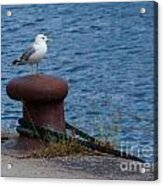 Seagull On A Bollard  Acrylic Print