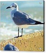 Seagull On Sea Wall Acrylic Print